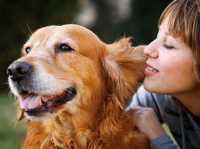 Pets grooming-services